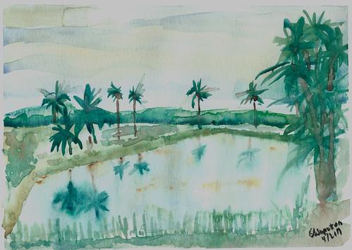 Rice Field, near Kalibo Aklan Philippines