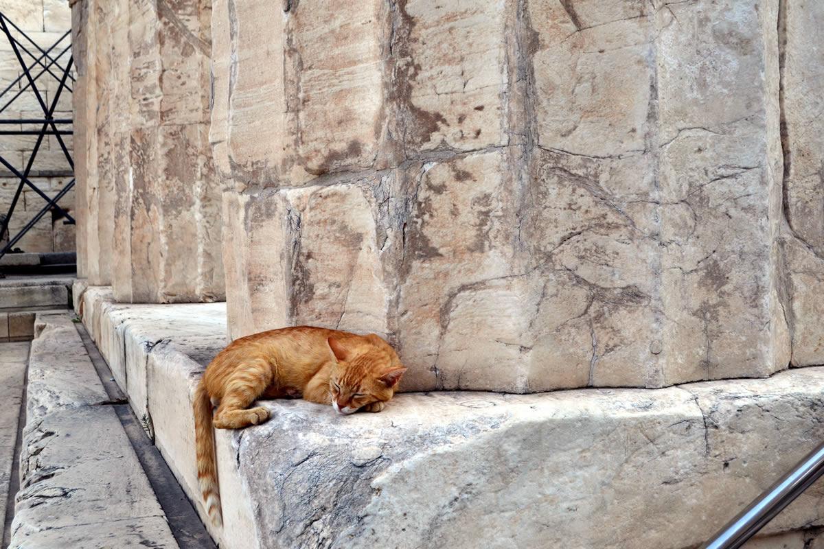 Gatos de la Acrópolis