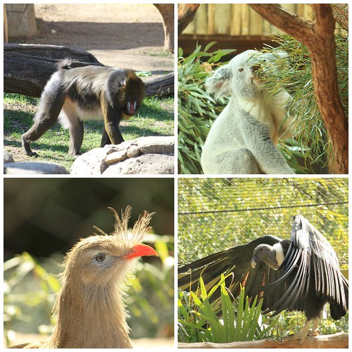 Dallas Zoo | by Anina2007