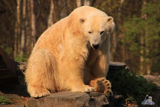 Tierpark Berlin 02.04.2017 215