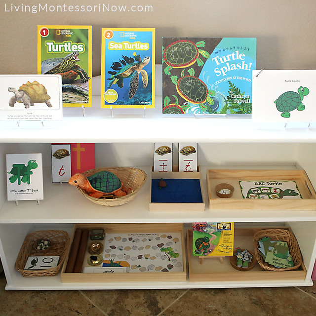 Shelves with Turtle-Themed Activities