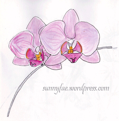 pink orchid sketch