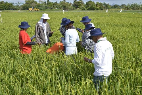 1st Crop Health Training