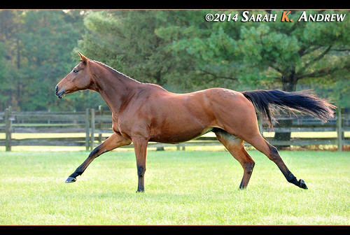 In training for the Breeders' Cup Turf... | by Rock and Racehorses