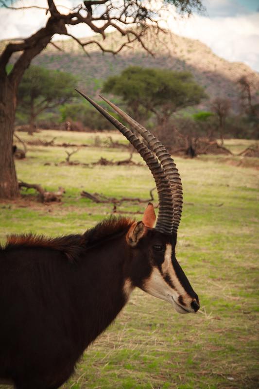 Tiersafari Namibia