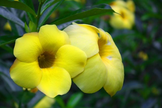 Flora cubana en Topes de Collantes y El Nicho
