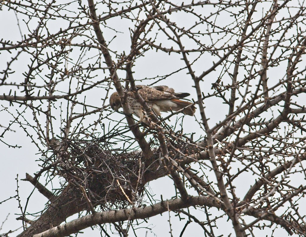 Christo at the remains of his 2016 nest
