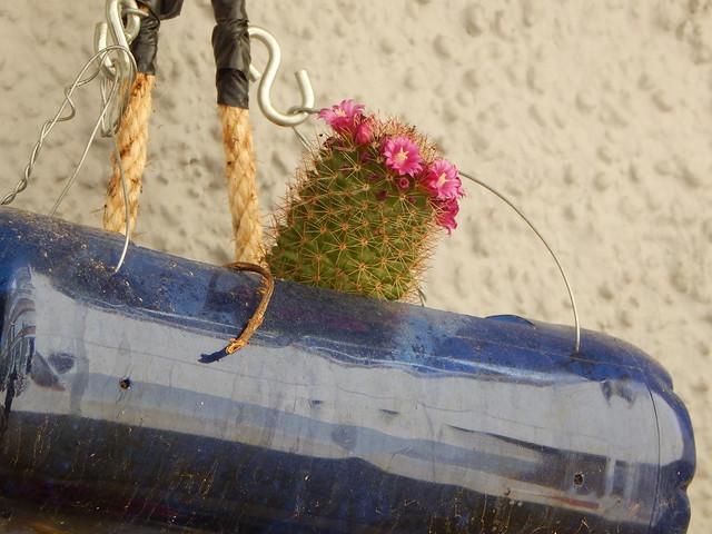 Primavera en los jardines verticales
