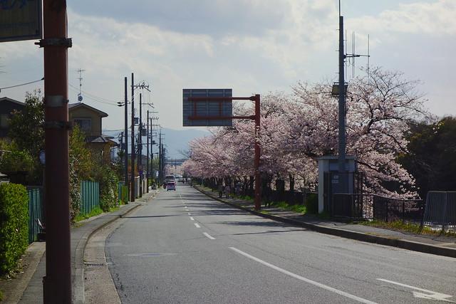 2017/04 高野川の桜 #04