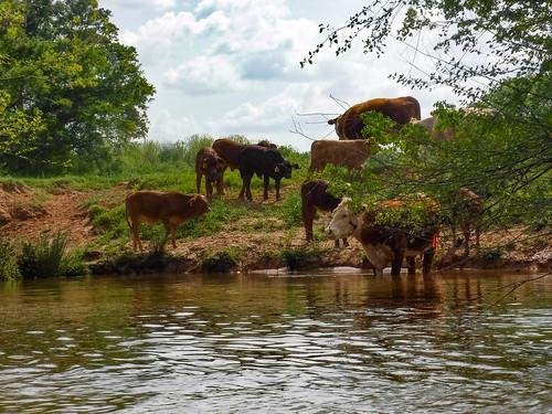 Dyar Pasture and Lake Oconee-111