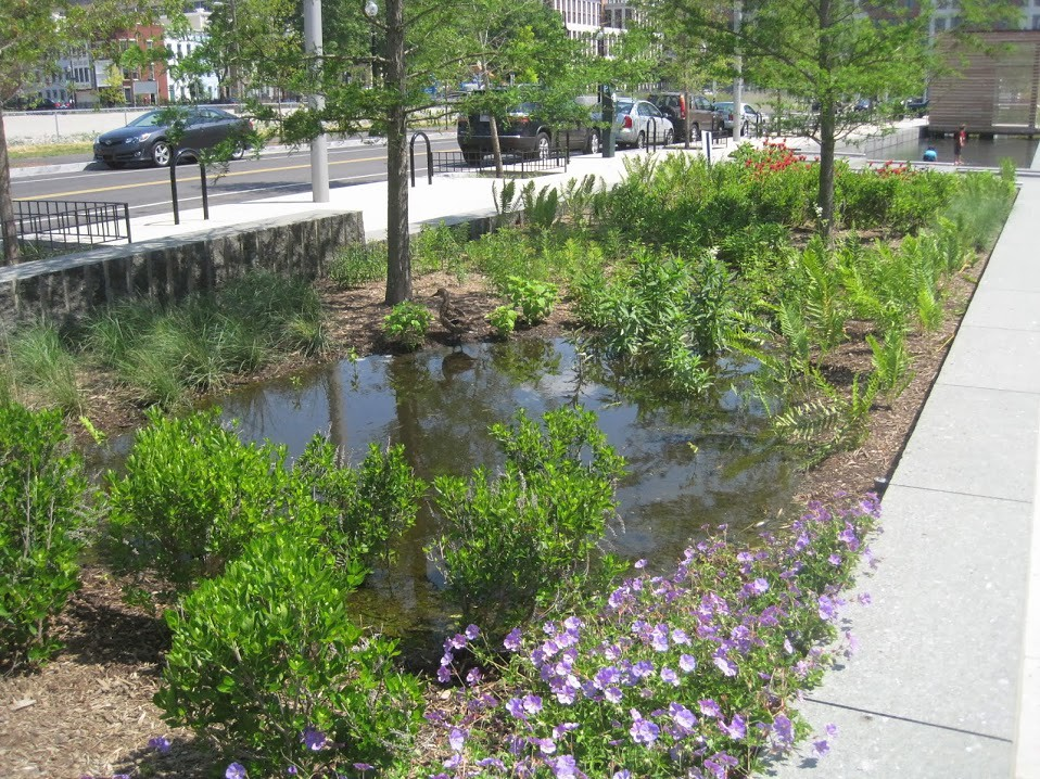Image result for rain garden