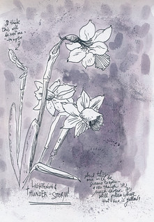 Sketchbook #102: Daffodils | by apple-pine