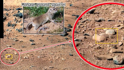 mars-mohave-ground-squirrel