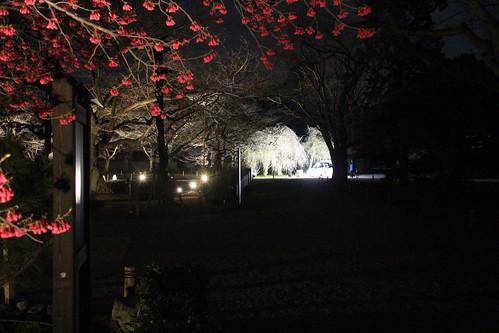 京都 元離宮二条城