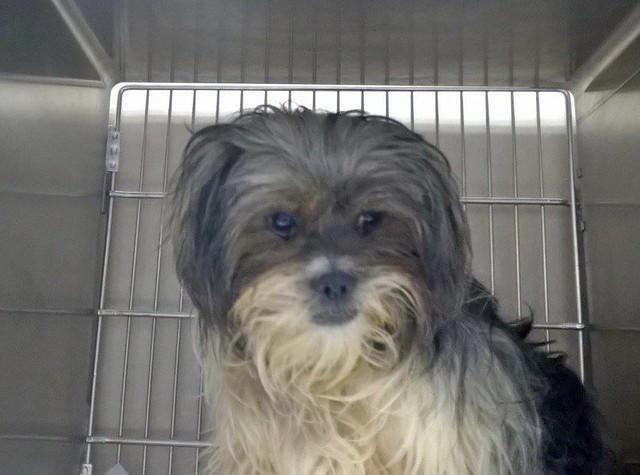 Petrakos for adoption