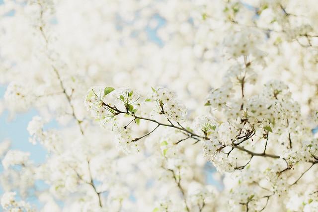 Blossoms-22