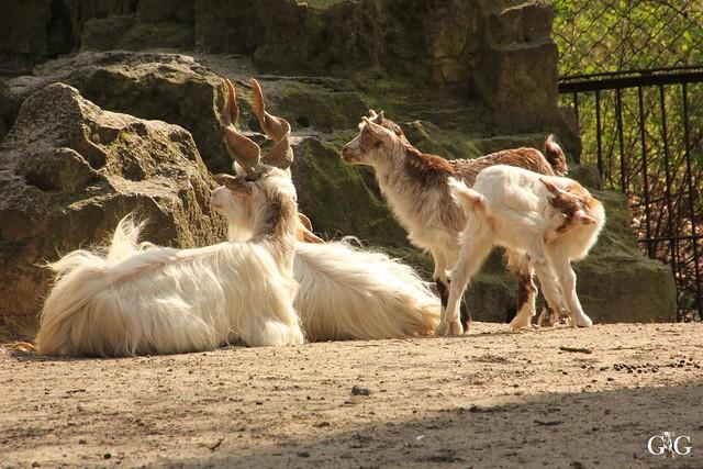 Frühlingstag Tierpark Friedrichsfelde am 02.04.2017136