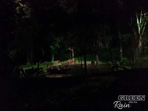 160912f Singapore Night Safari _060