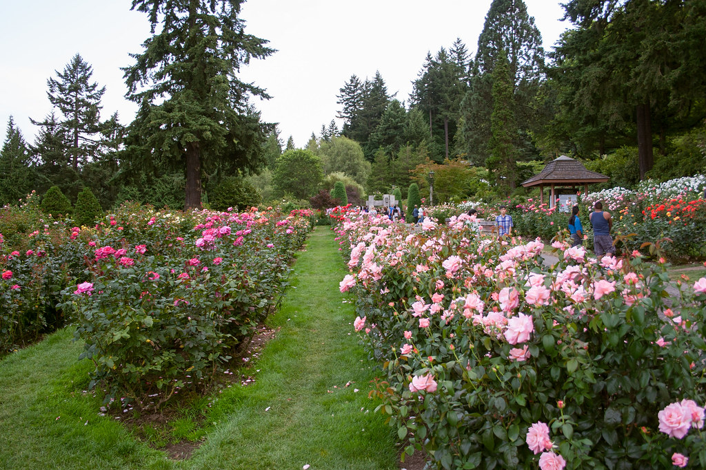 International Rose Test Garden | Washington Park, Portland, … | Flickr