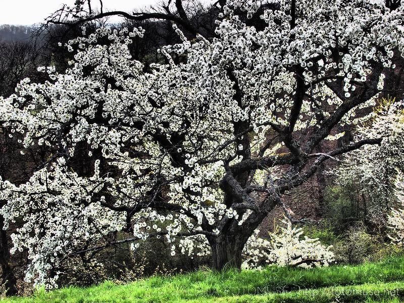 Spring Walking, 1