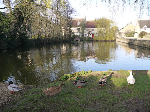 Moreton Duck Pond