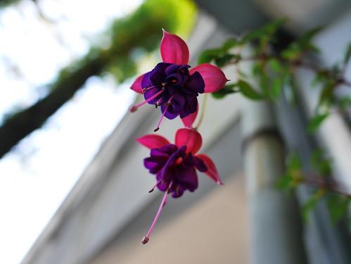 紫の不思議な花