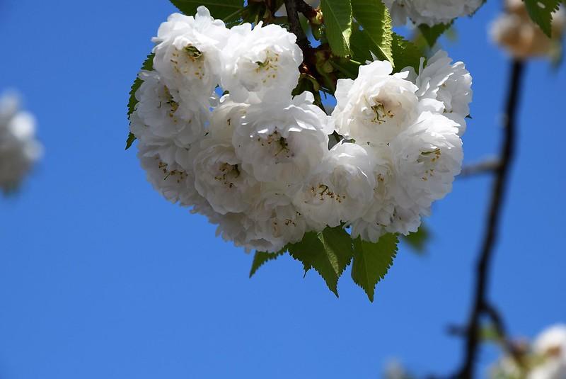 Rowan Tree 12.04 (3)