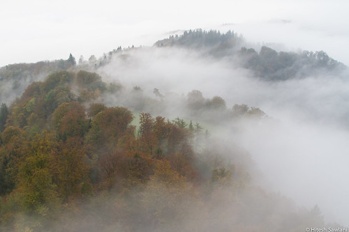 Morning Fog in Uetliberg | by Madrid Pixel