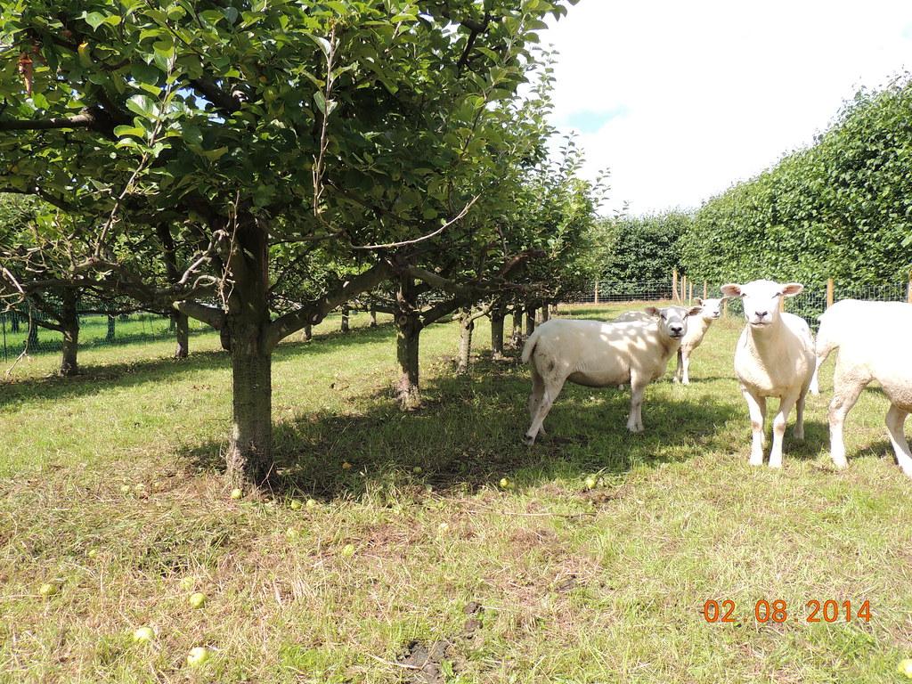 Loughgall northern ireland