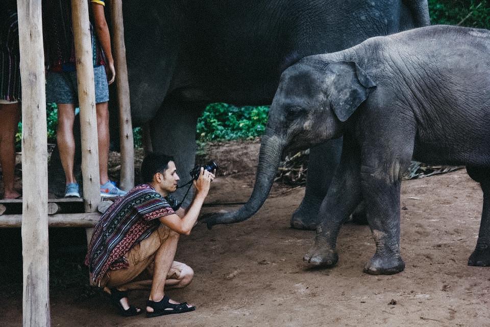 slonie_02