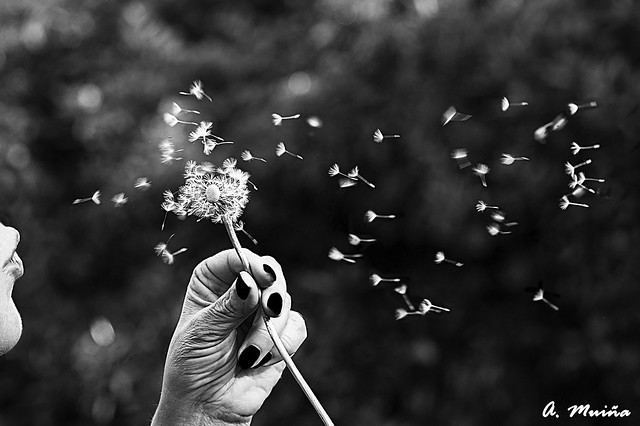 More dreams to the wind, now in Black and White