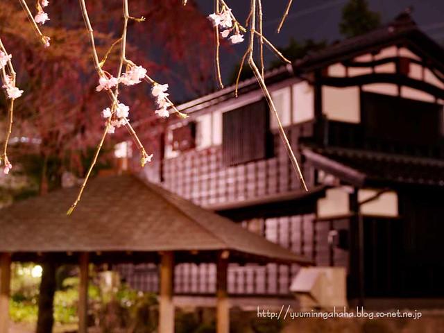 八幡杜の館 夜桜 中島丁公園