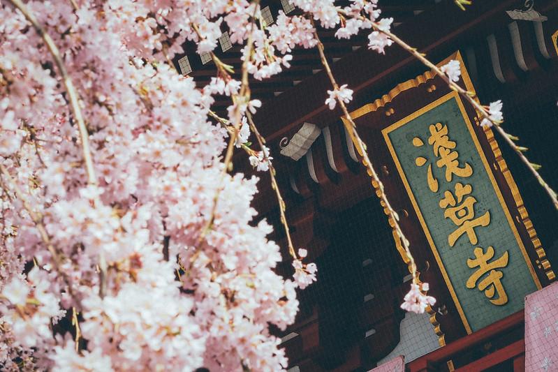 Asakusa Temple 淺草寺|東京都 Tokyo