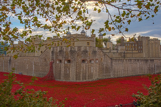 Moat of Poppies - The Tower of London | by Aaron Miller - Postcard Intellect