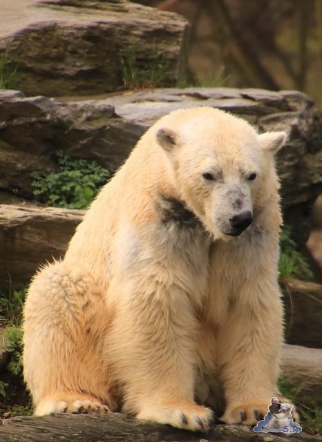 Tierpark Berlin 02.04.2017 004