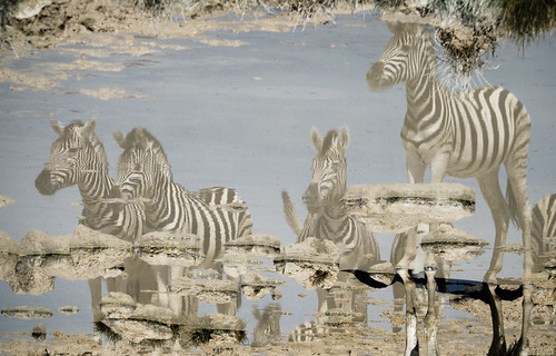 Etosha National Park | by Fotoblog.hu