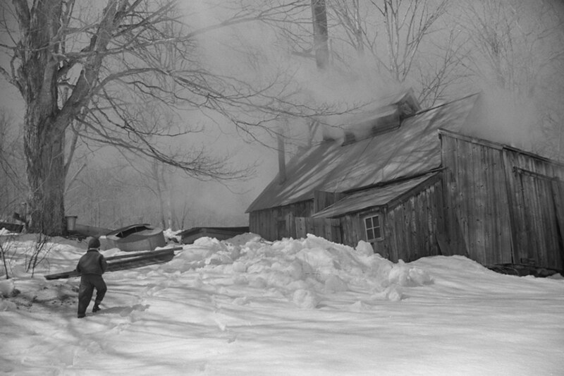 Young daughter of Frank H. Shurtleff going towards the sugar house where sap from sugar maple trees is boiled down into maple syrup.