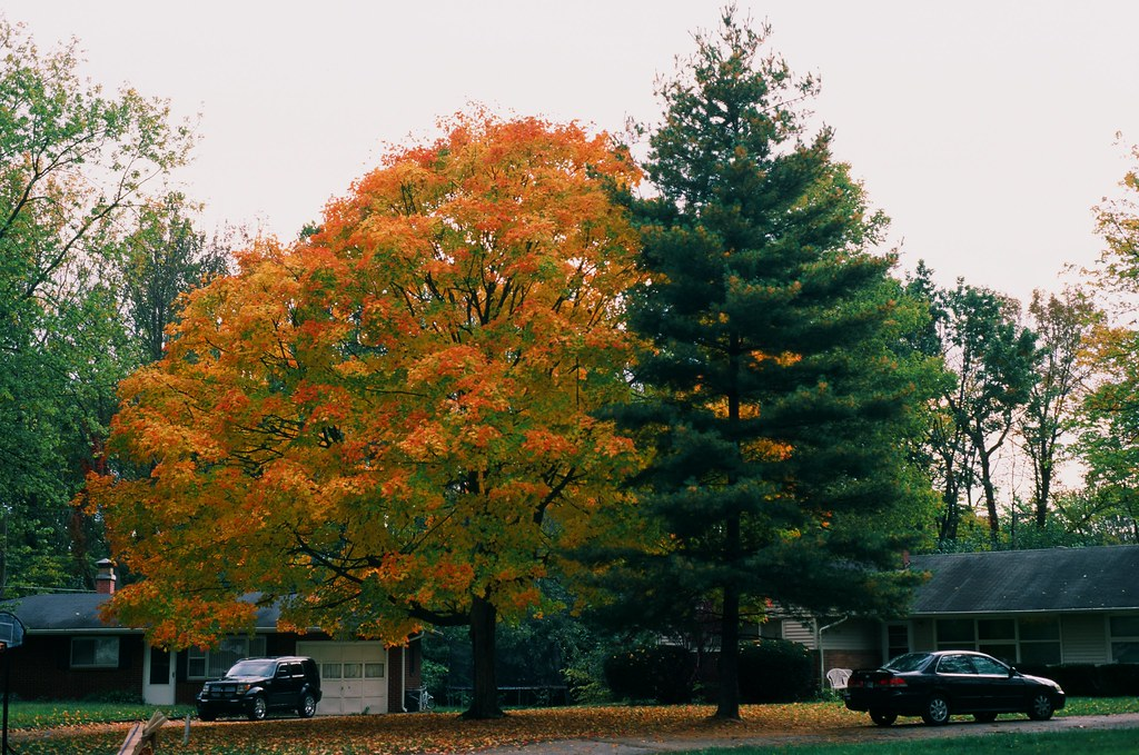 Neighborhood trees