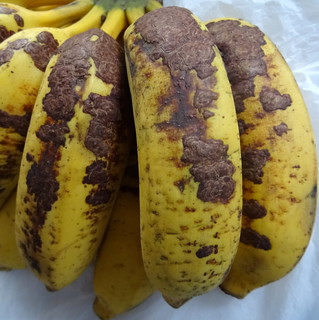 Brown corky scab of banana fruits | by Plant pests and diseases