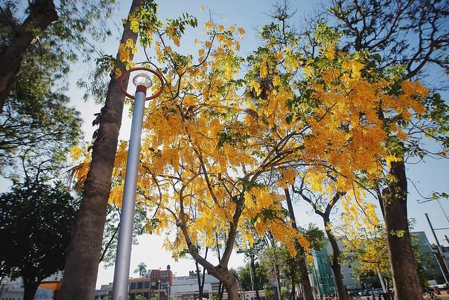 Estas vacaciones, visita los parques de Guadalajara.