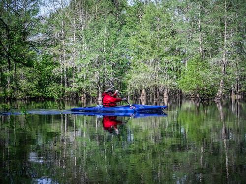 Sparkleberry Swamp-20