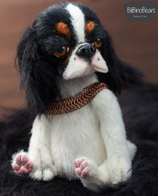 Ruby- tricolor Cavalier King Charles Spaniel