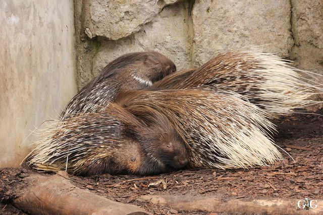 Tierpark Friedrichsfelde 19.03.201720