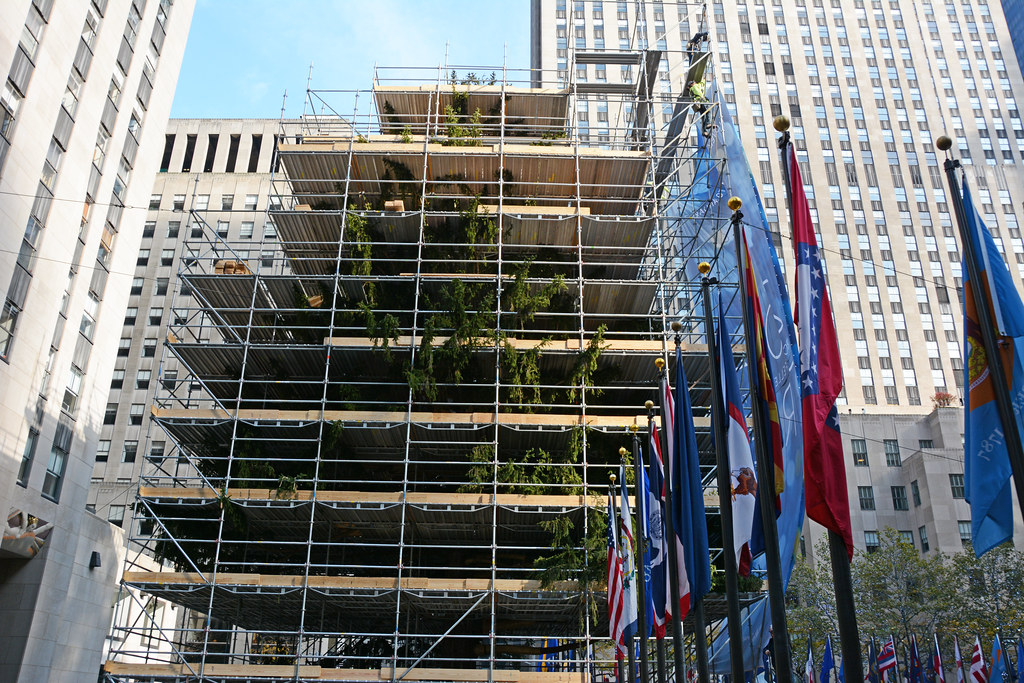 Lights Will Now Be Put Picture Of 2014 Rockefeller Center Christmas Tree Surrounded By Scaffolding. Lights Will Now Be Put & Picture Of 2014 Rockefeller Center Christmas Tree Surroundu2026 | Flickr