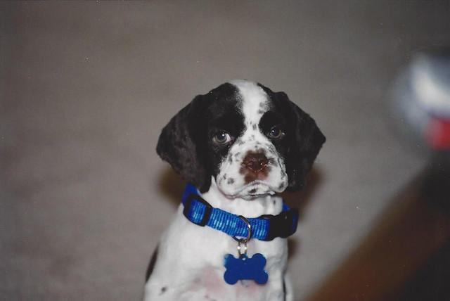 Molly_puppy10