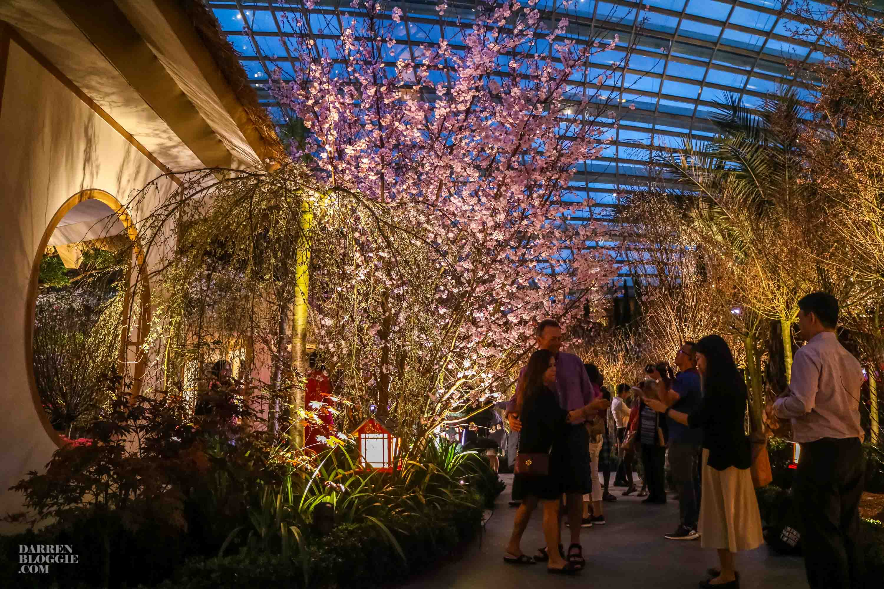 Cherry Blossoms in Bloom at Gardens by the Bay | Darren Bloggie 達人 ...