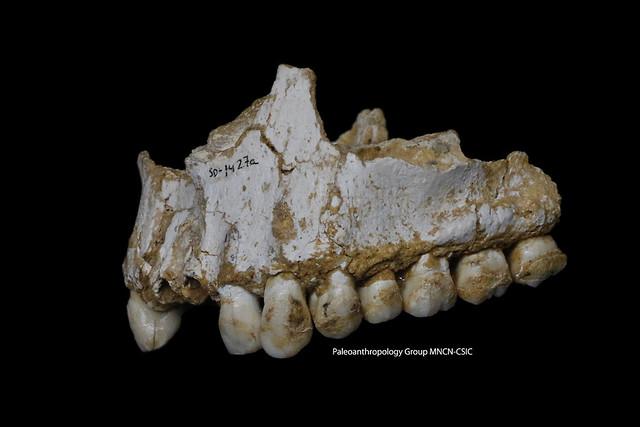 neandertaldieta1