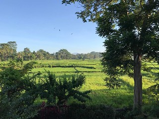 Good morning Bali! #paddyfields | by crab68