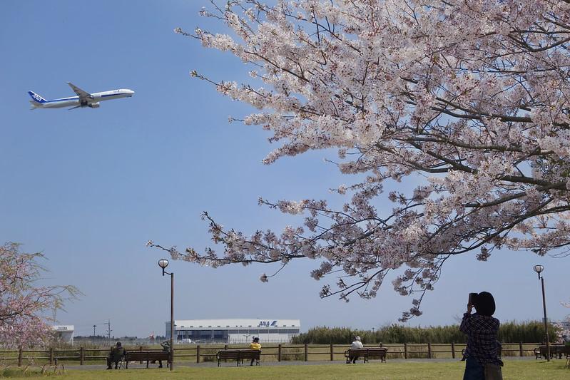 成田さくらの丘公園