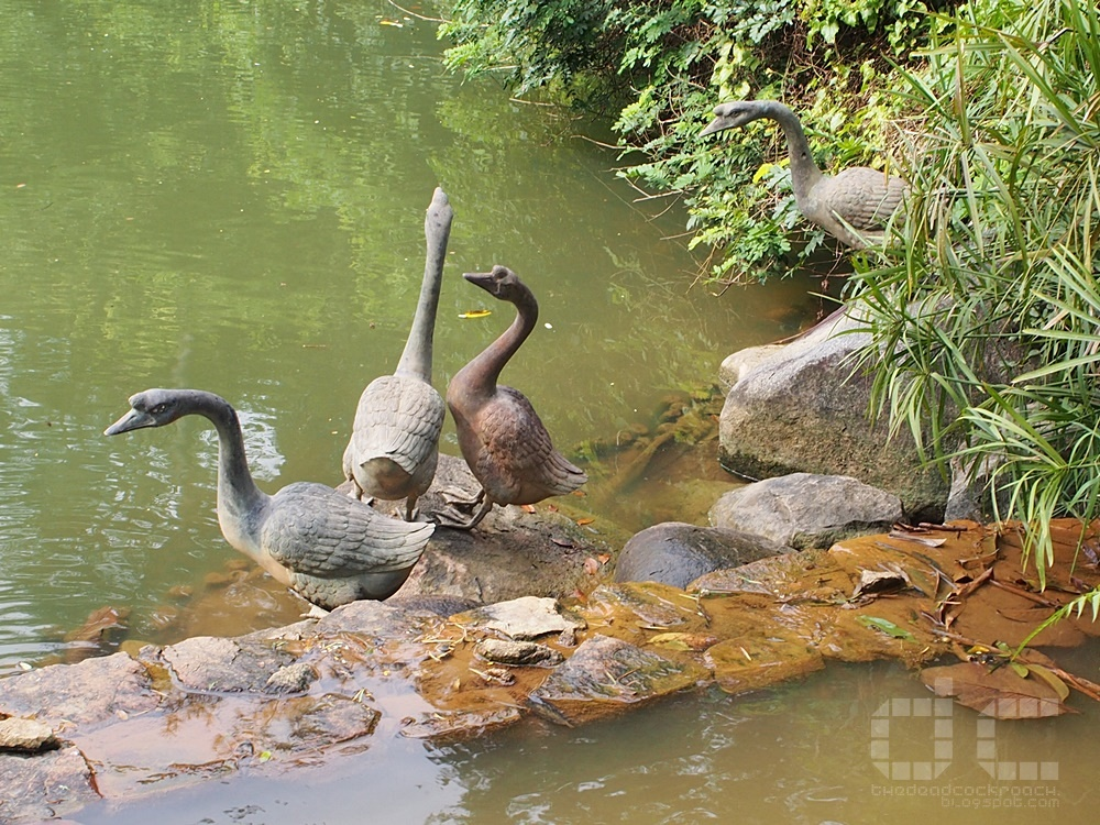 botanic gardens, singapore, singapore botanic gardens, swan lake, tanglin gate, where to go in singapore, sbg,unesco,geese,sculpture